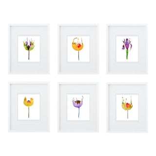 Botanical Art Print Grouping - Set of 6