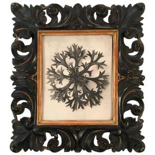 Karl Blossfeldt Plant Photogravure in Carved Leaf Frame