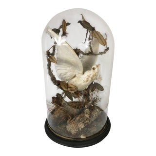 19th Century Victorian Domed Dove Display