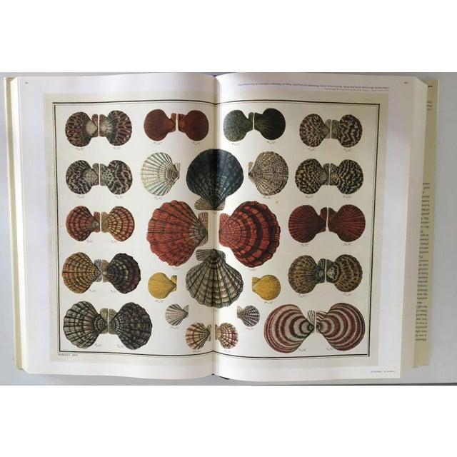 Cabinet of Curiosities by Albertus Seba - Image 6 of 11