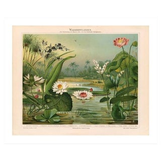Vintage Lily Pads Archival Print