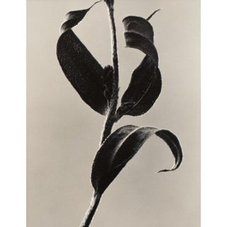 Eric Axene Gelatin-Silver Print - Thumbs Up