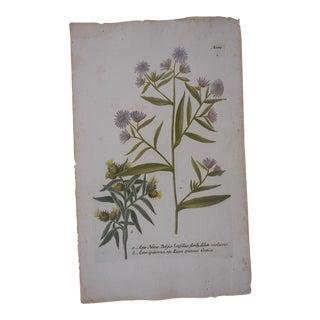 Johann Weinmann Botanical Mezzotint C. Folio size