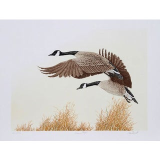 """C. Forrest, """"Canada Geese in Flight,"""" Lithograph"""