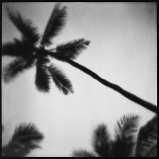 """Palms"" Black & White Vintage Film Photograph"