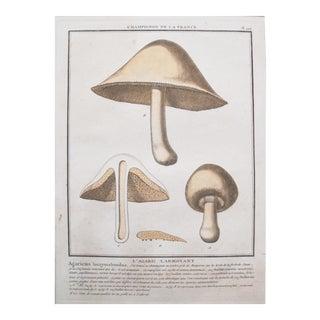 1780 French Mushroom Botanical Plate, Agaric Larmoyant