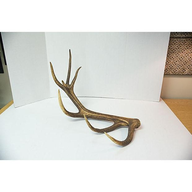 Image of Vintage Natural Antler