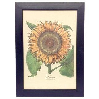 Flos Solismaior Sunflower Lithograph