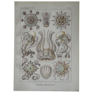 Ernst Haeckel Sea Creatures Lithograph