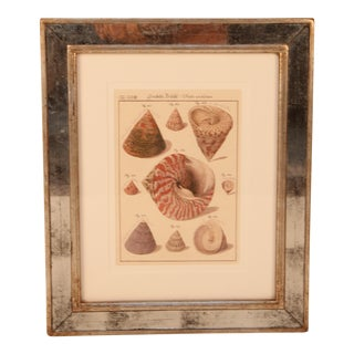 Mirrored Frame St. Kitts Shells Print