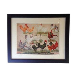 1907 Antique American Fowl Breeds Print