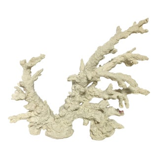 White Coral Specimen