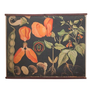 Vintage Black Botanical Print