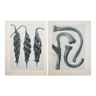 Karl Blossfeldt Double Sided Photogravure N23-24