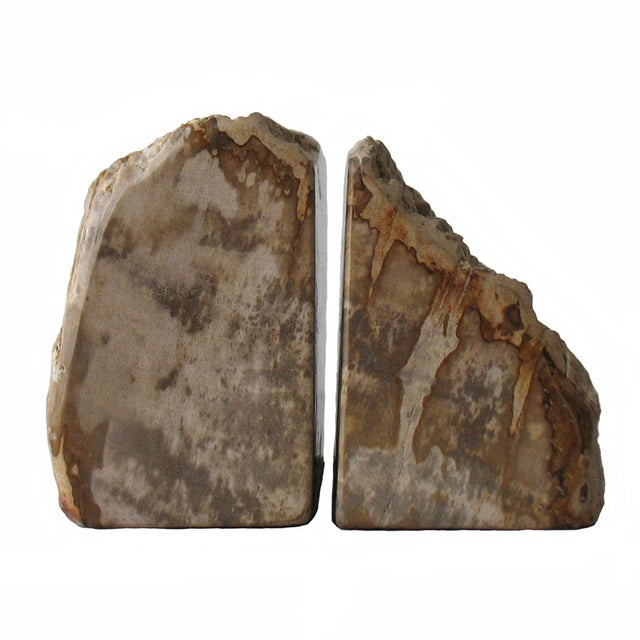 Image of Petrified Wood Bookends - Pair