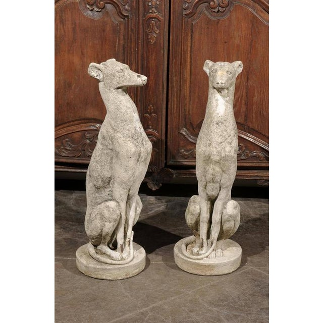 Pair of Vintage Carved Cement Greyhound Sculptures Sitting on Circular Bases - Image 2 of 9