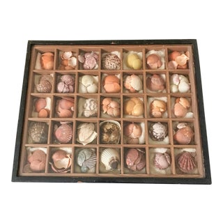 Victorian Seashell Shadowbox #2