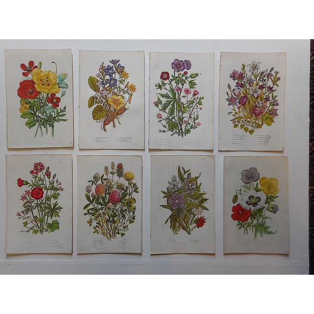Image of Antique Botanical Lithographs - Set of 8