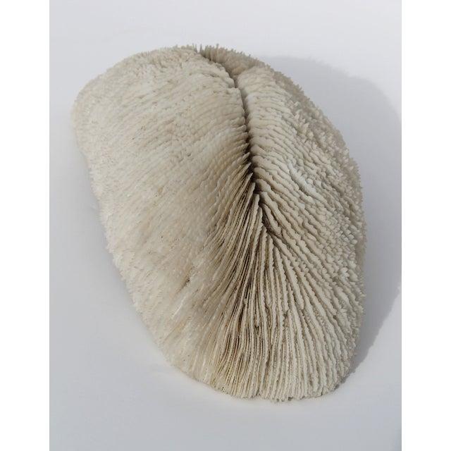 Image of Rare Antique Coral