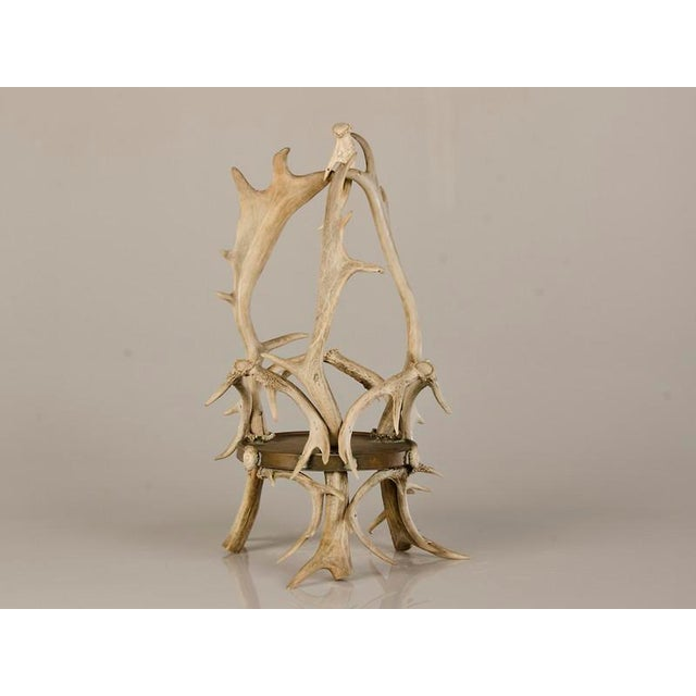 Circular Display Platform Enclosed with Hand Assembled Shed Antler Horn from Scotland c.1875 - Image 3 of 9