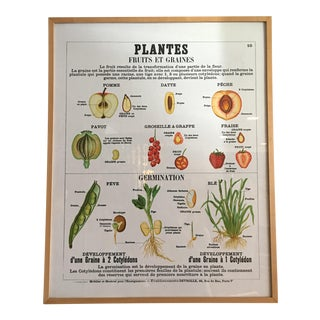 Emile Deyrolle- Plantes Chart Framed Lithograph