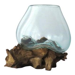 Glass on Teak Driftwood Terrarium