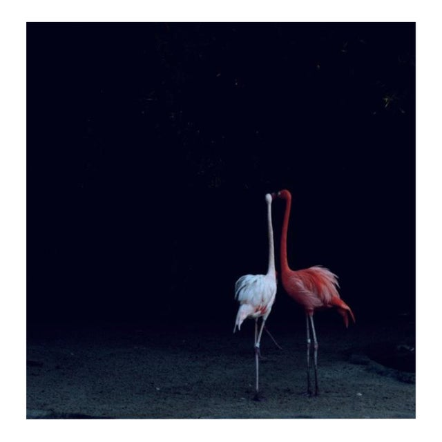 "Nicole Cohen ""Flamingos"" Pigment Print - Image 1 of 3"