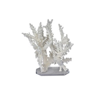 Natural White Branch Coral & Lucite Base