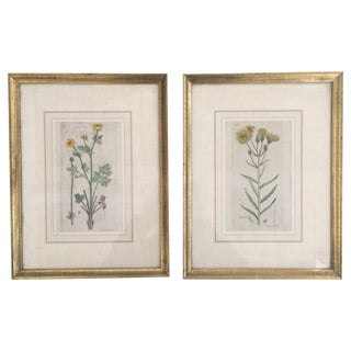 Antique Hand Colored Botanical Engravings - A Pair