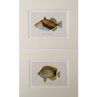 Hawaiian Fish Lithographs - A Pair