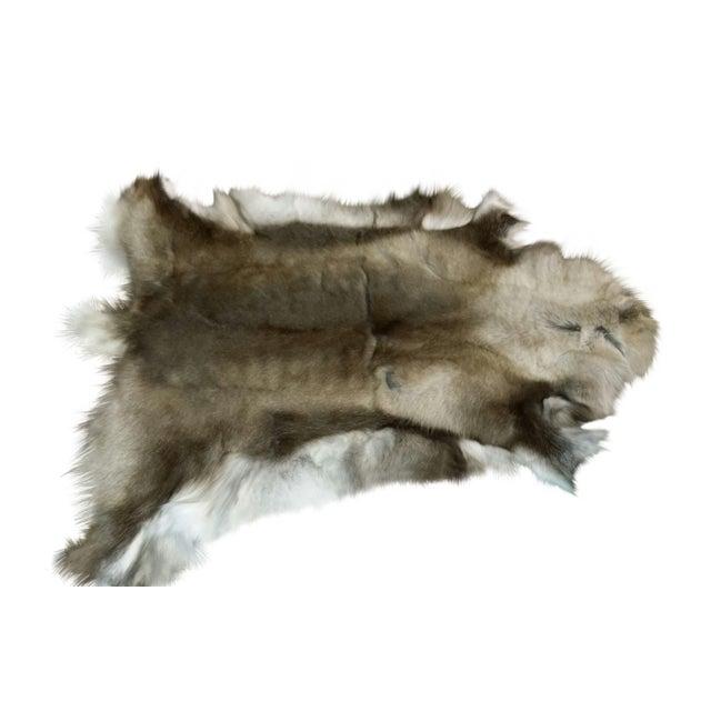 """Reindeer Hide Rug Dark - 3'7""""x4' - Image 2 of 2"""