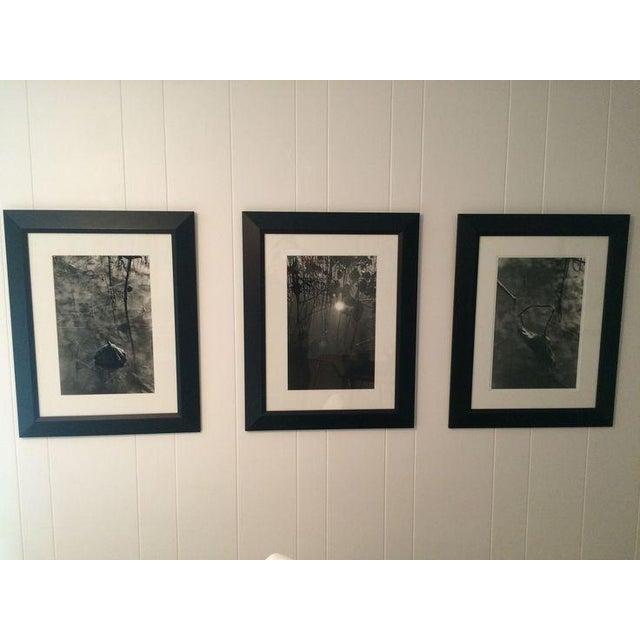 "Image of Jason Thrasher ""Lotus Pond 3"" Photograph"