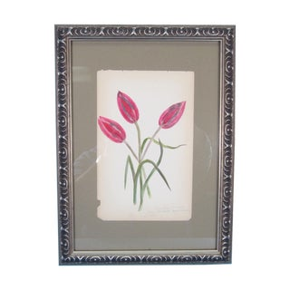 Antique 1883 Flower Watercolor Painting