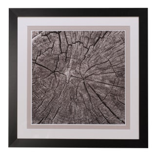 Sarreid LTD Tree Trunk Giclee Print