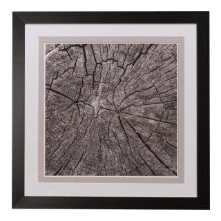 Sarreid LTD Tree Trunk Giclee Print