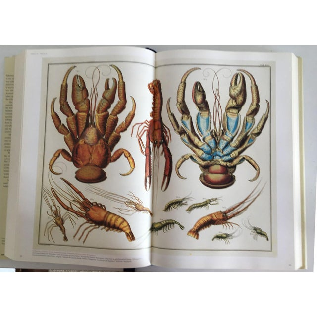 Cabinet of Curiosities by Albertus Seba - Image 3 of 11