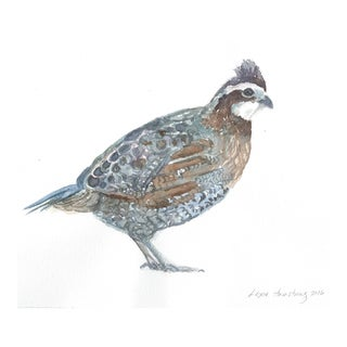 Northern Bobwhite Watercolor Painting