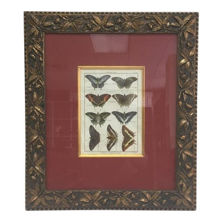 1800s Hand Painted Butterfly Lithograph