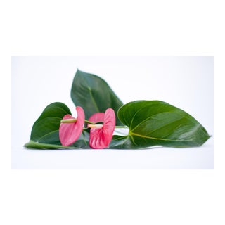 Pink Flowers With Green Leaves Photograph