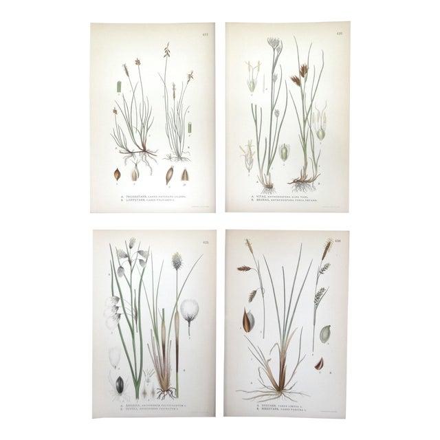 Swedish Floral Prints, Set of 4 - Image 1 of 6