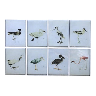 Coastal Sea Bird Framed Prints - Set of 8