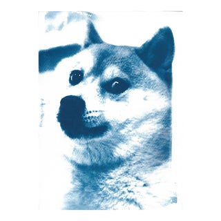 Limited Edition, Doge Meme! Wow! Much Cool! Cyanotype Print on Watercolor Paper