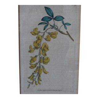 Hand-Colored Botanical Print