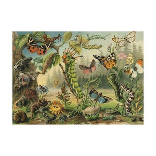 Antique 'Caterpillars & Insects' Archival Print