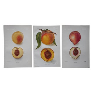 1900's Antique Peach Lithographs - Set of 3