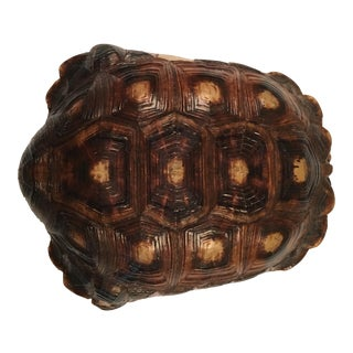 Authentic Natural Tortoise Shell