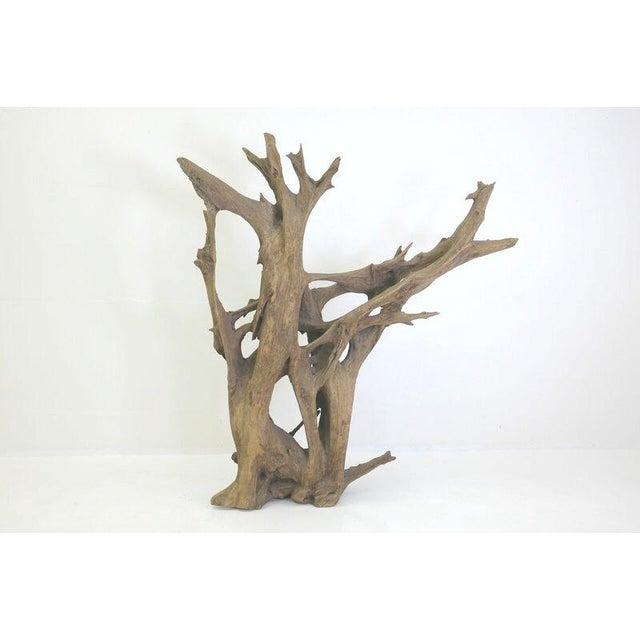Drift Wood Sculpture - Image 2 of 9
