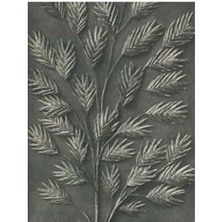 Karl Blossfeldt Original Botanical Study, Circa 1928