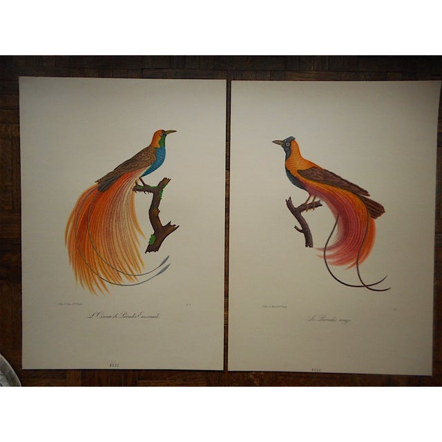 Vintage Tropical Bird Folio Size Lithographs- Pair - Image 2 of 3
