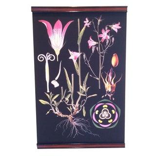 Bellflower Botanical Chart